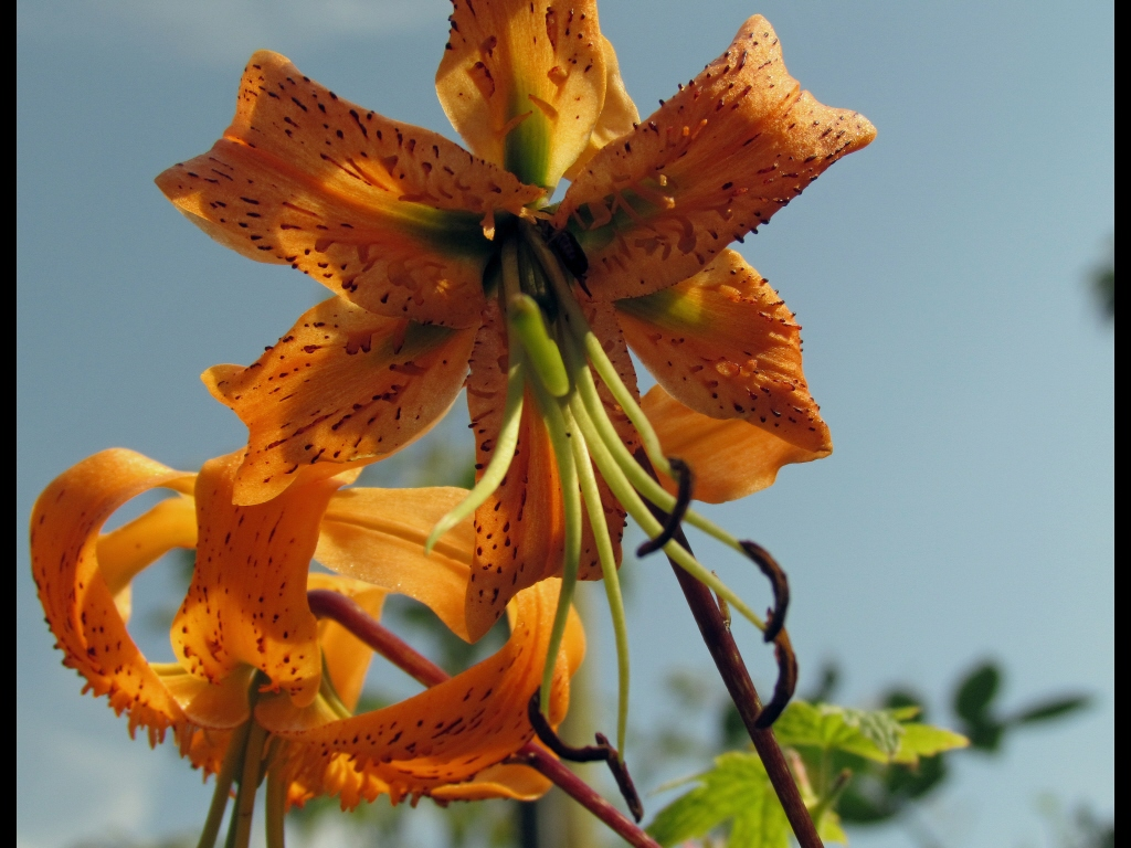 017_tri-battle_flowers_lilies-jpg