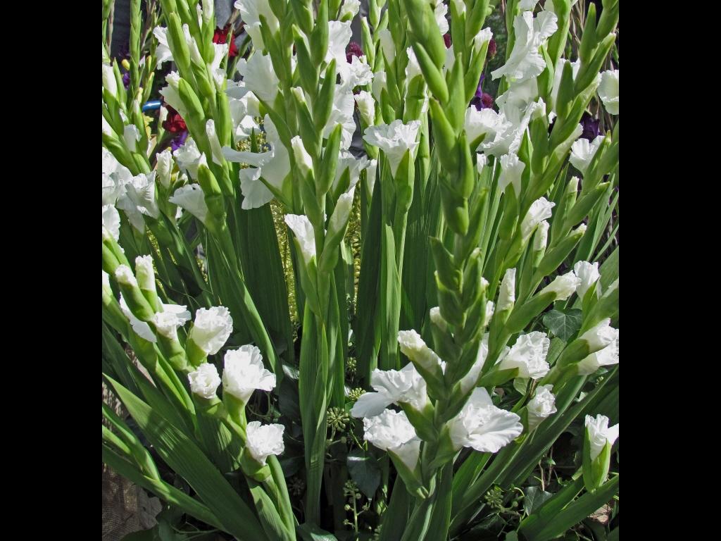 017_tribattle_flowers_lilies-jpg