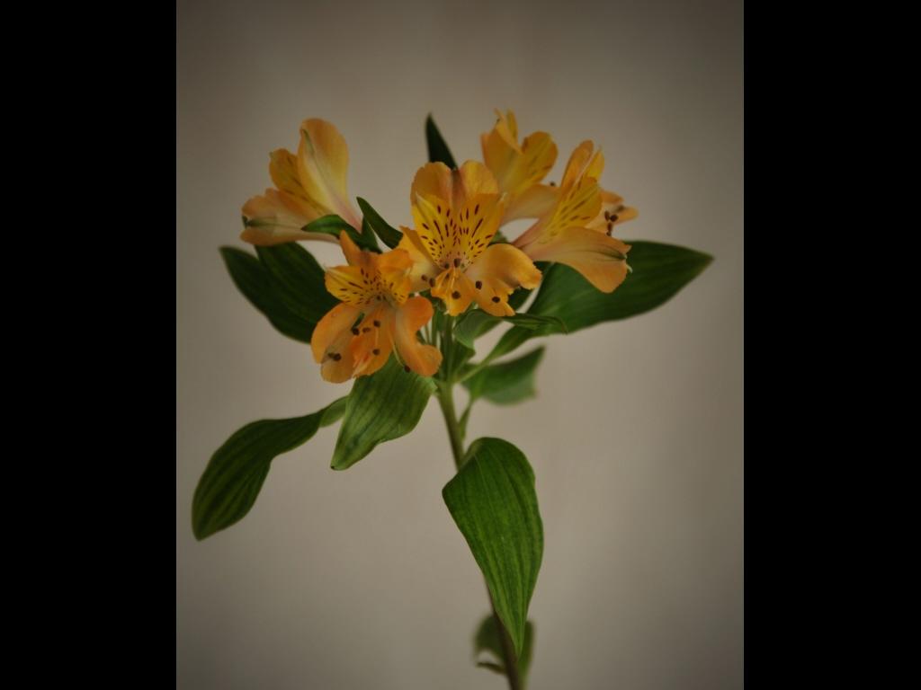 039_flowers_-jpg