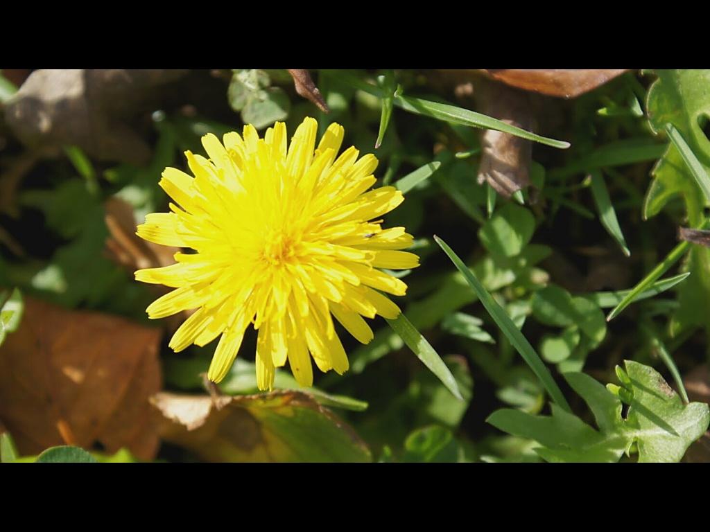 042_flowers_golden-burst-jpg
