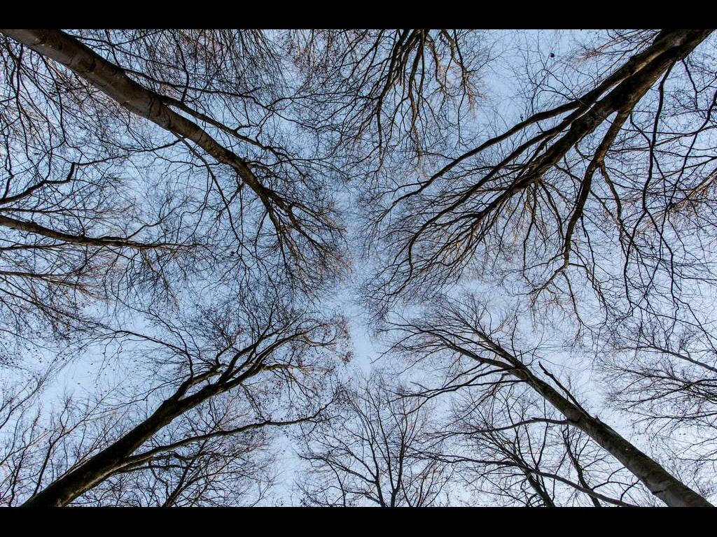 opposit-trunks-jpg