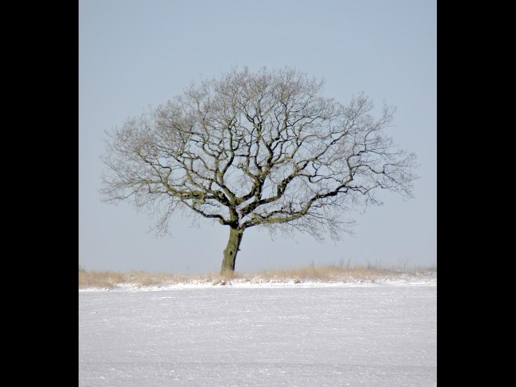 017_tri-battle_trees_wooton-bassett-winter-jpg