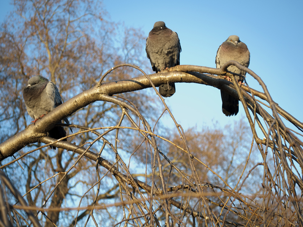 025_trees_perch-jpg