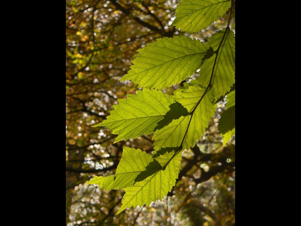 029_trees_broken-leaf-jpg