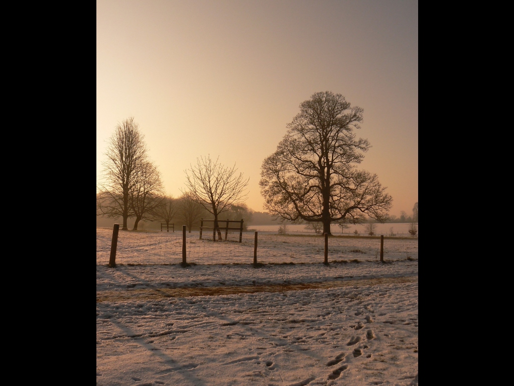 029_trees_winter-trees-jpg
