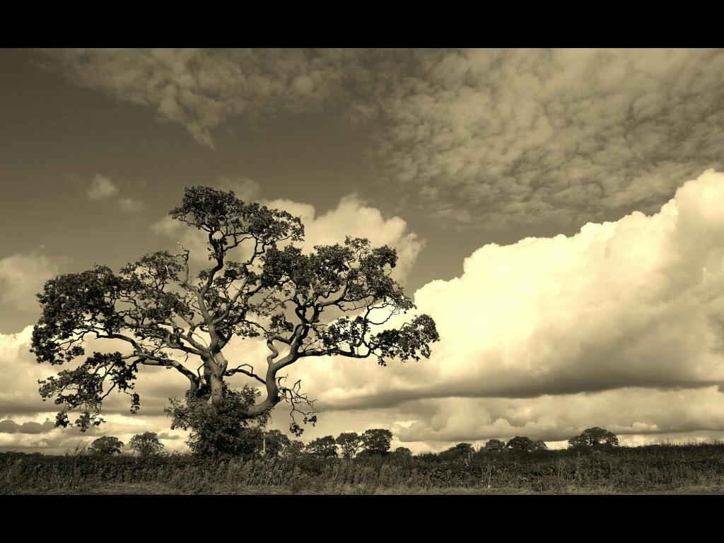 042_trees_treemendous-wiltshire-tone-jpg