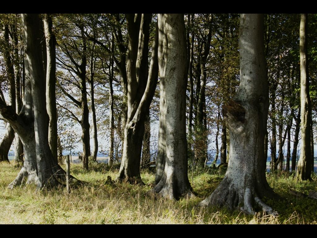 042_trees_wiltshire-woodland-jpg