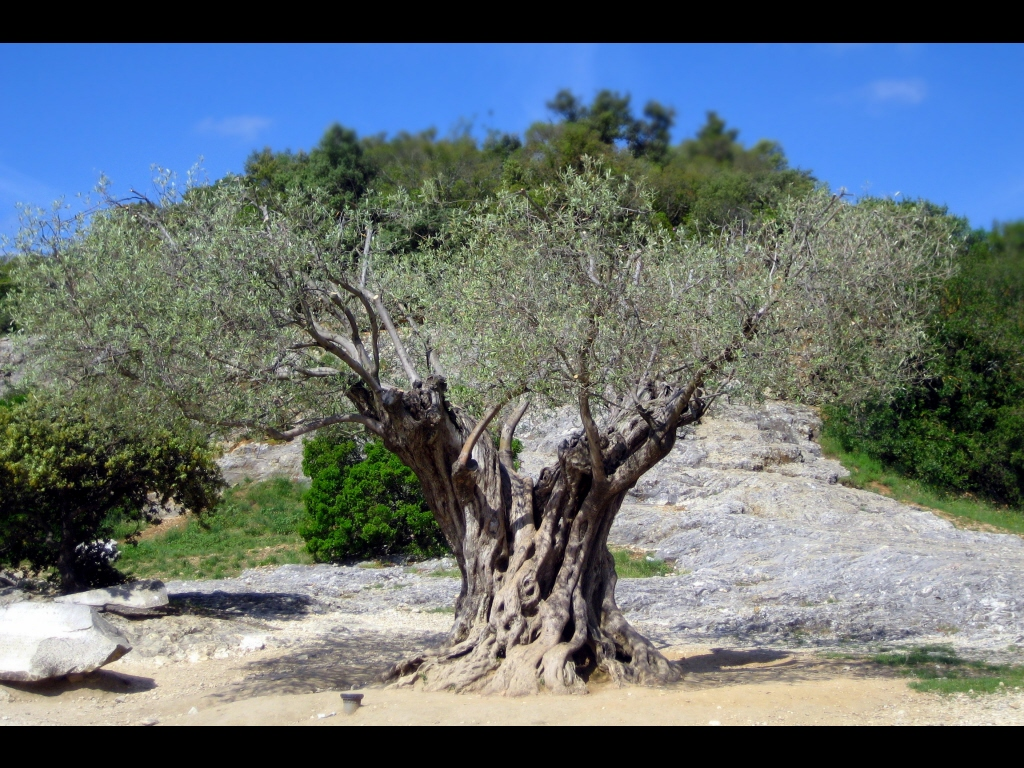 049_tribattle_trees_still-standing-jpg