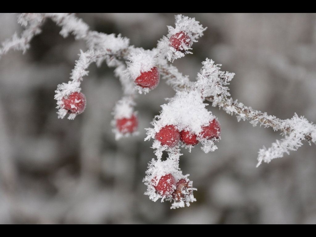 039_weather_frosted-hawthorn-jpg