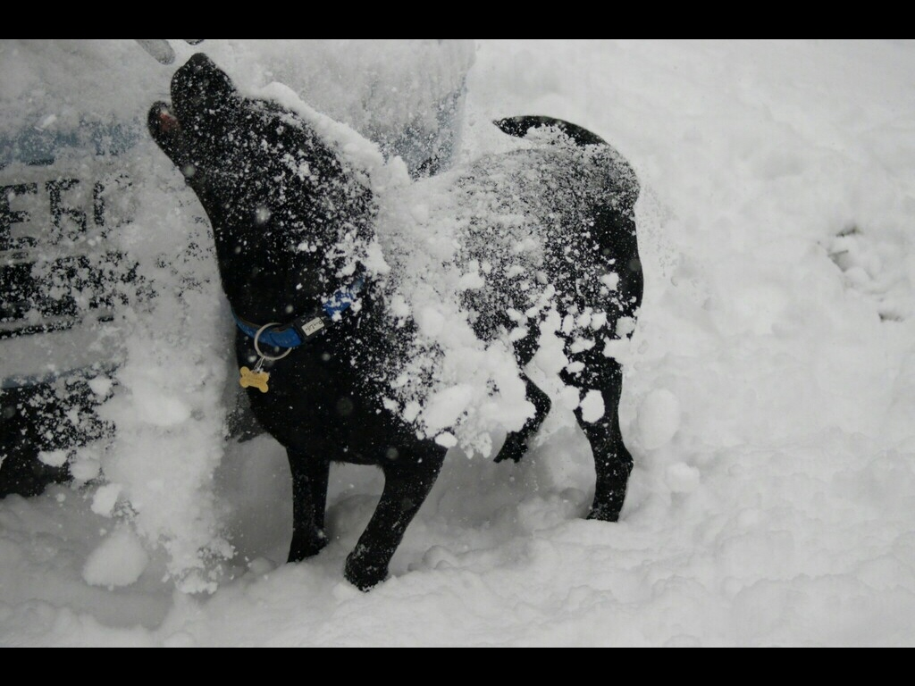 042_open_black-dog-white-snow-jpg
