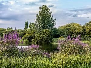 Moulden Hill Park Lake